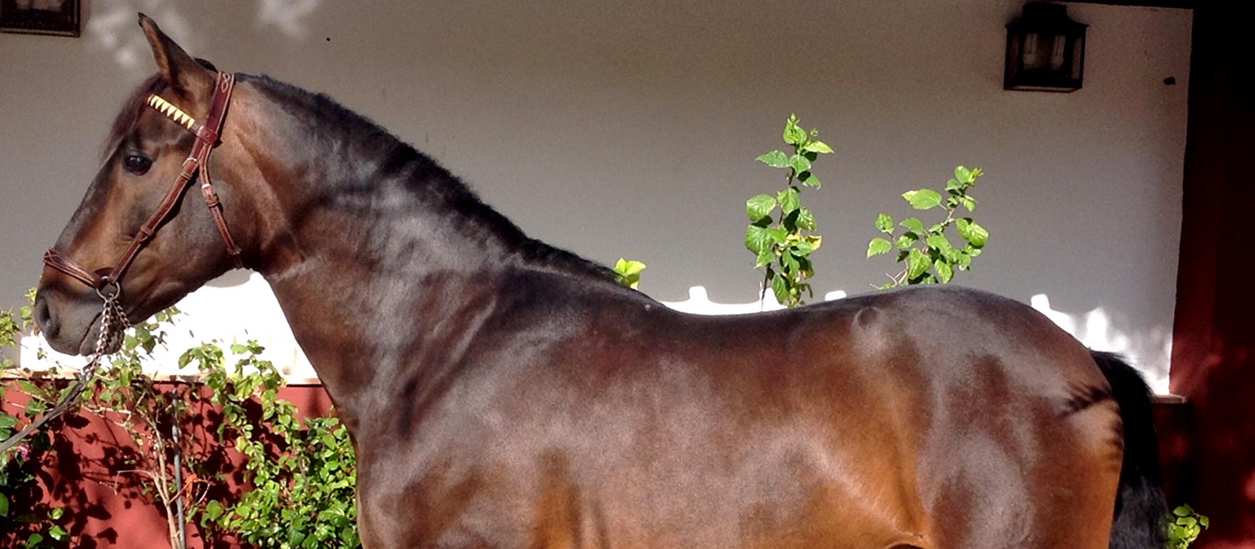 caballo_
